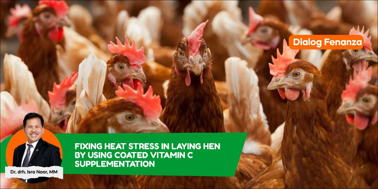 How to Prevent Heat Stress with Vitamin C Supplementation